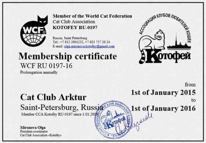 Выставочные титулы кошек. порядок получения титулов