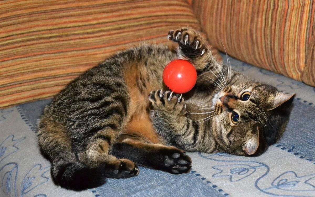Почему взрослые коты не любят играть?