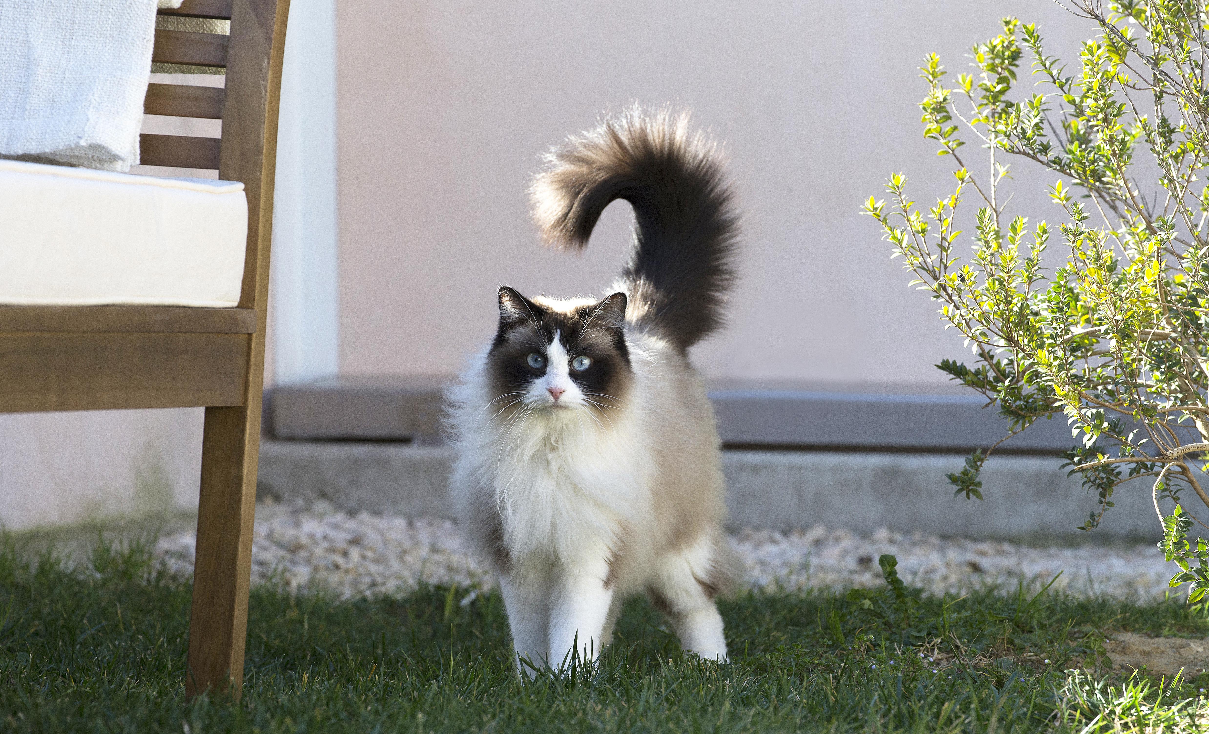 Кот-цветовод: как отучить кота барсика есть комнатные цветы