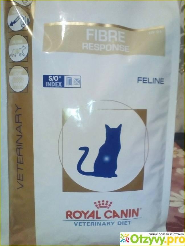 Слабительное для кошек в домашних условиях   можно ли кошкам слабительное, какое