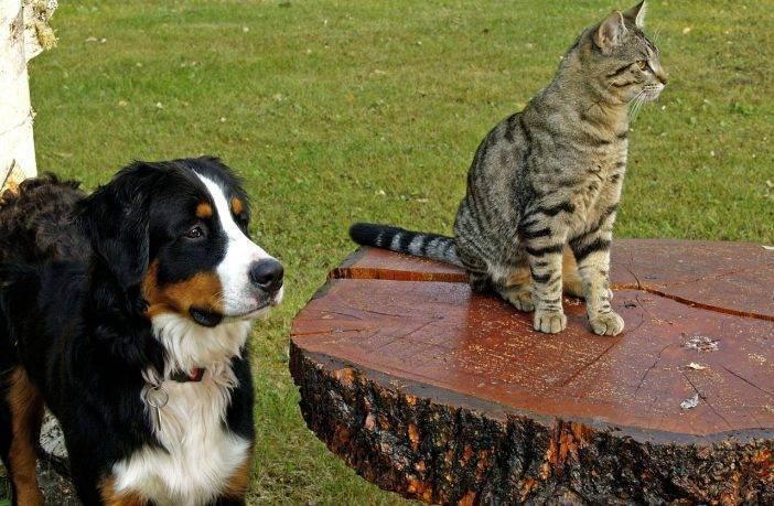 Корма для собак acana regionals