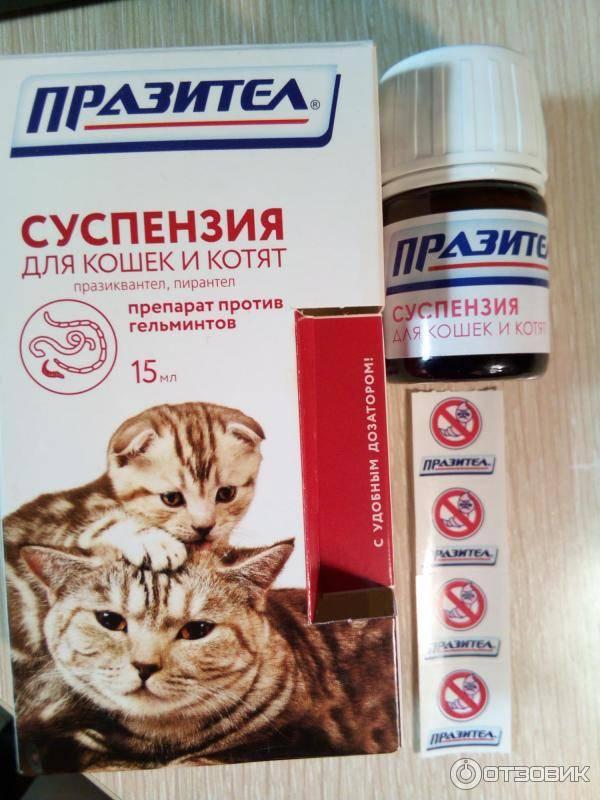 Суспензия от глистов для кошек и котят: как определить дозировку и дать животному?