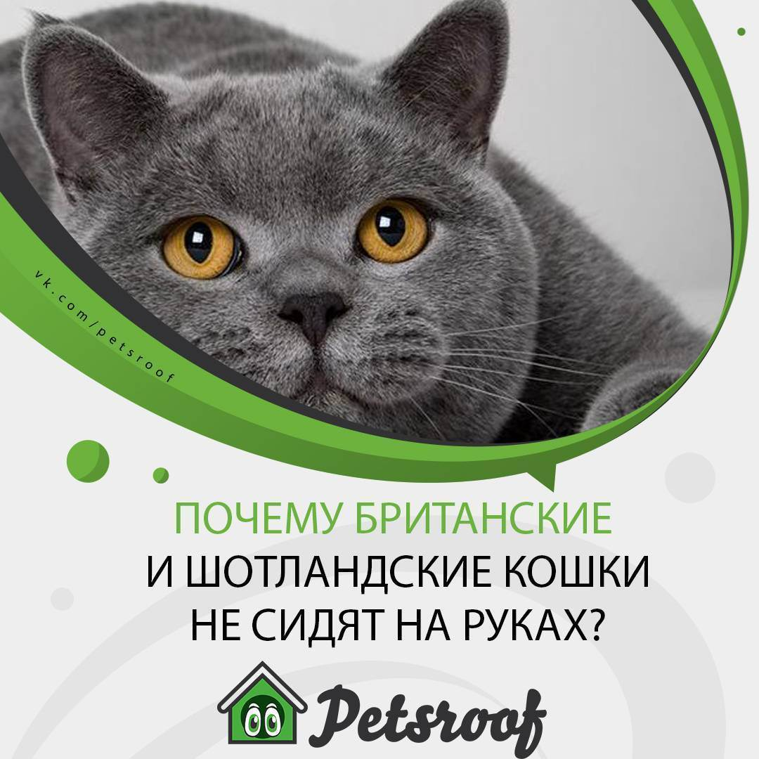 Почему кошка не любит сидеть на руках и как ее приучить | кот и кошка