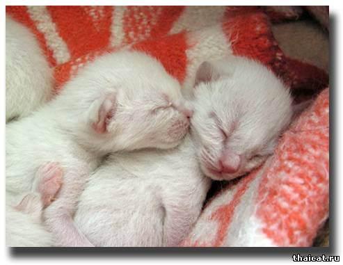 Кошка родила мертвых котят что делать