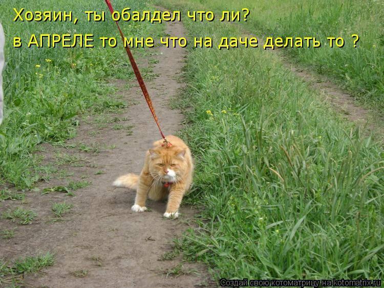 Кошка гуляет как успокоить в домашних условиях народными средствами