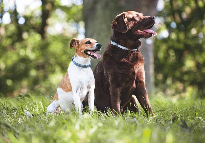 Современные средства от блох и клещей для собак