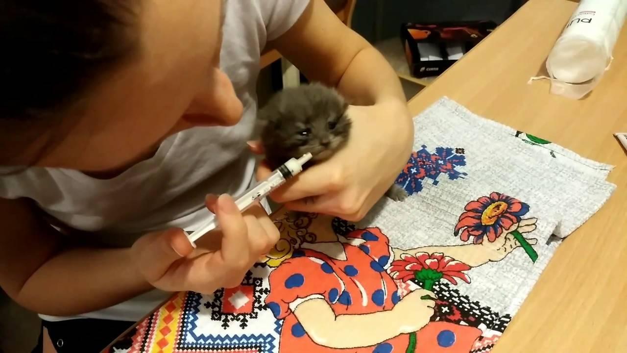 Как правильно кормить котенка из шприца? | zdavnews.ru