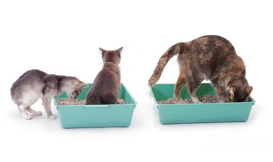 Варианты приучения кошки к новому месту жительства и хозяину, примеры разных пород
