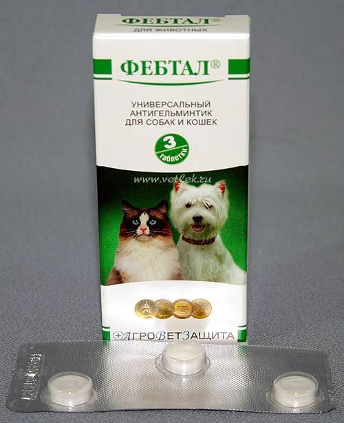 Применение фебтал комбо для кошек и собак при лечении глистных инвазий