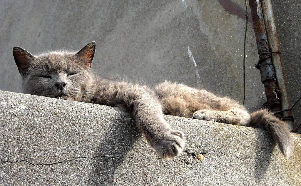 Успокоительные и снотворные средства для котов и кошек в дороге