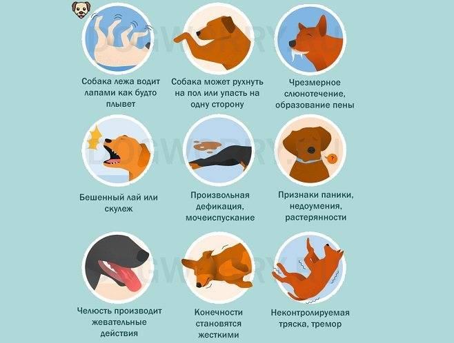 Судороги у кошек: причины и что делать   пена изо рта, лечение
