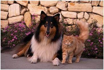 """Ветклиника подольск """"айболит"""". зачем нужна стерилизация кошки - ответы на вопросы"""