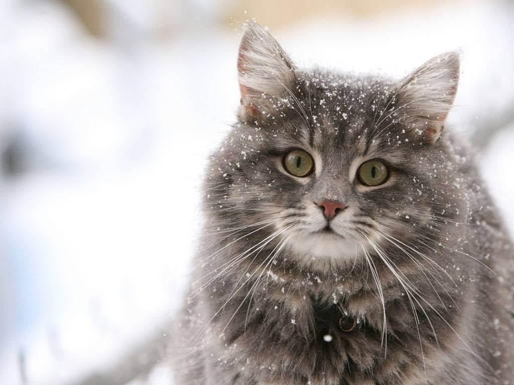 Как считать года кошек по человеческим годам