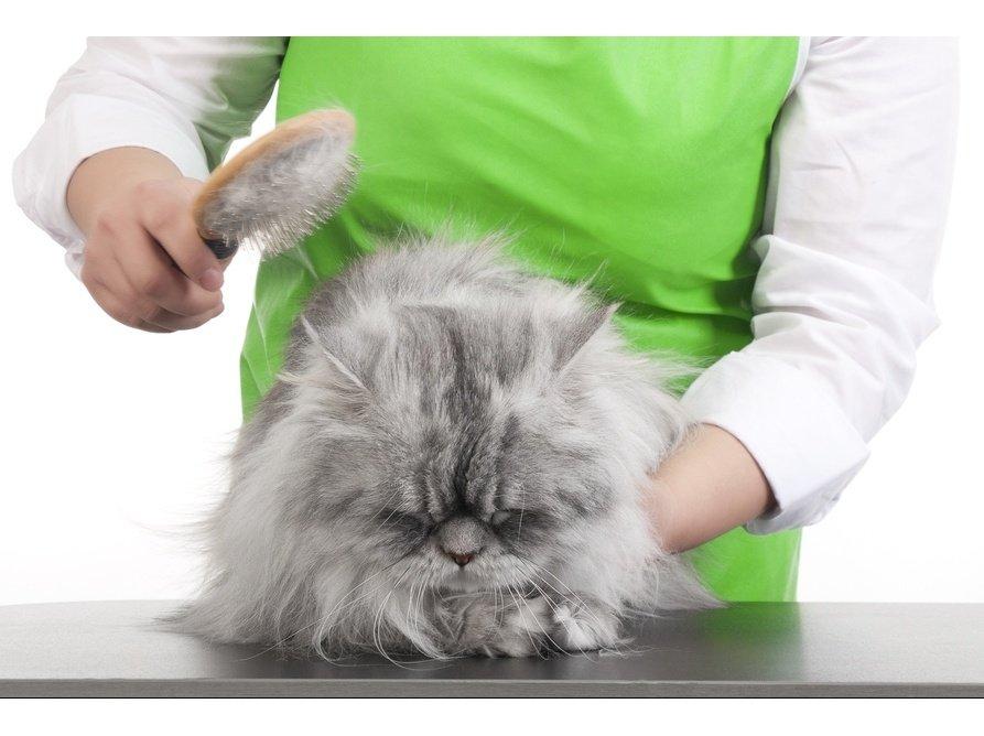 Что такое колтуны у кошек и как с ними бороться