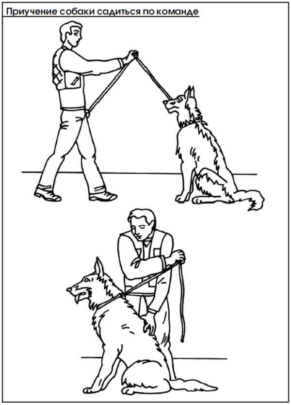 Как дрессировать крысу: дрессировка в домашних условиях для начинающих, как научить командам и трюкам, как воспитывать и тренировать домашнее животное