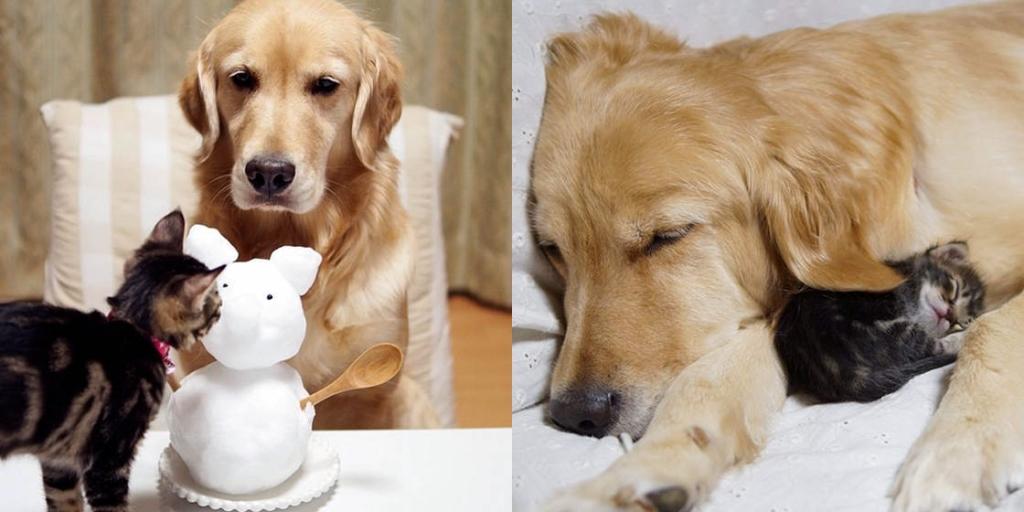 Приучаем собаку к котенку или секреты вечной дружбы
