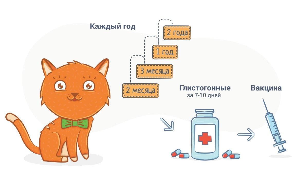 Вакцины для кошек: виды и популярные препараты