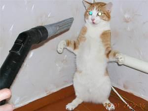 Трусливая кошка и дача