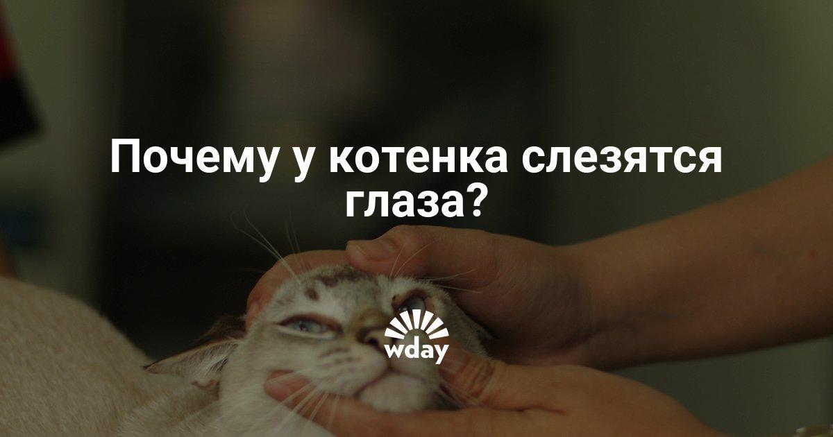 Почему у котенка слезятся глаза и что делать