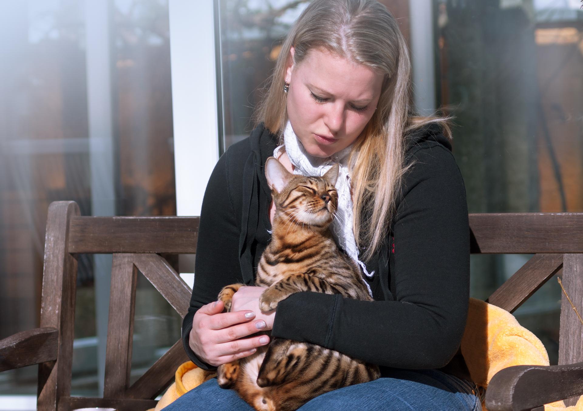 Как приучить котенка к рукам: британского, шотландского