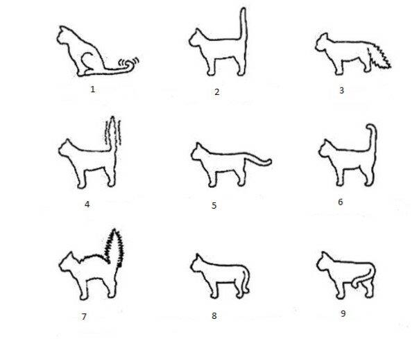 Все основные болезни и травмы хвоста у кошек их причины, симптомы и методы лечения
