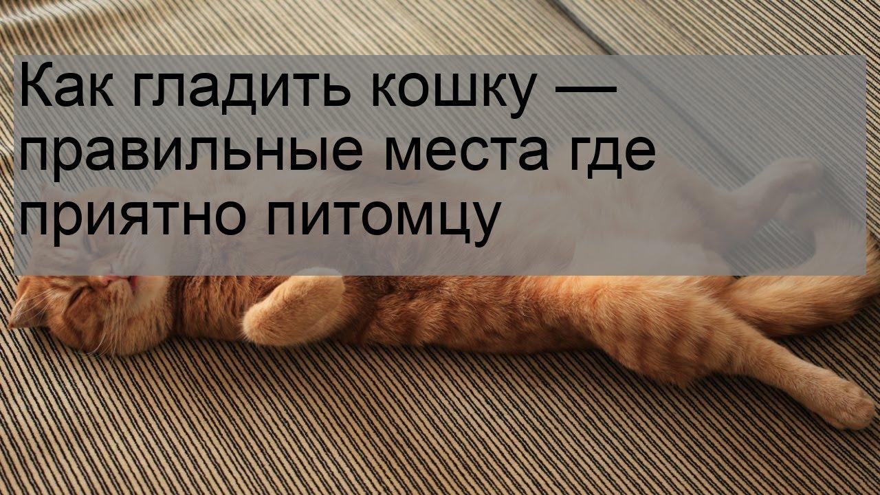 Как понравиться кошке: 3 простых совета - лайфхакер