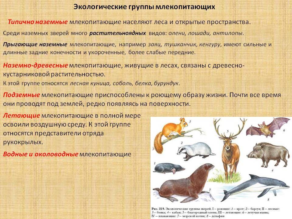 Дикие кошки: породы, виды