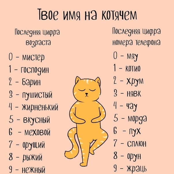 Необычные и редкие клички для котов и кошек