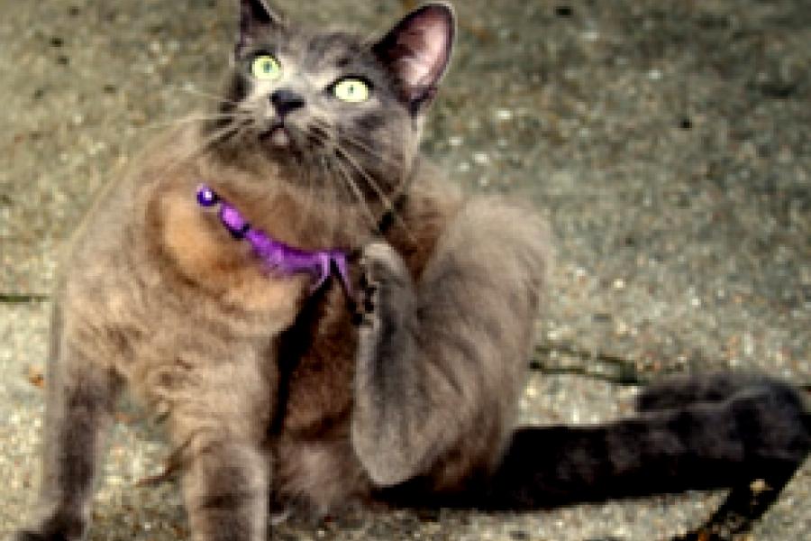 Советы при покупке котенка