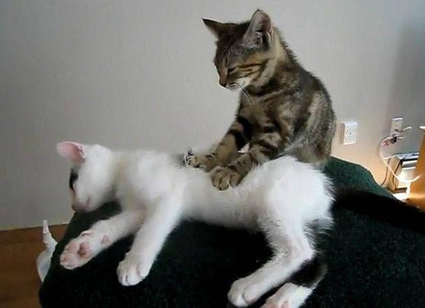 Почему кошки когтями делают массаж - кошки и собаки простыми словами