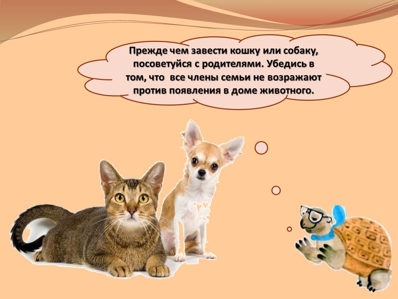 Причины, почему лучше завести двух котов, чем одного