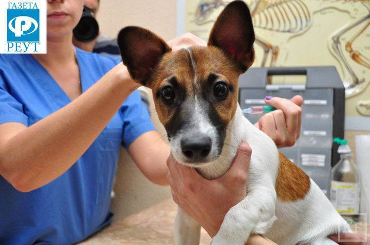 Прививки для собак