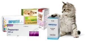 Обязательно ли глистогонить кошку перед прививкой