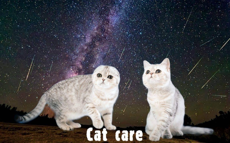 Как чистить уши кошке в домашних условиях? этапы и аксессуары для животного