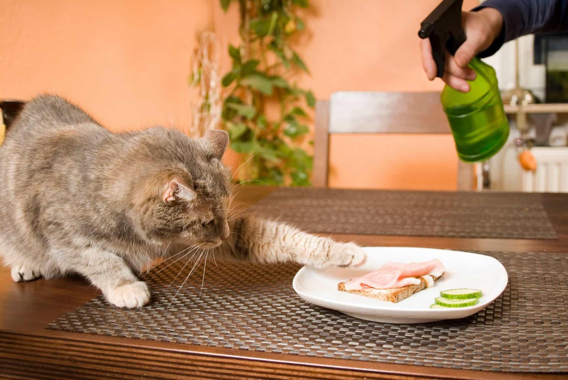 Как правильно наказывать кошку – 7 способов перевоспитания кота
