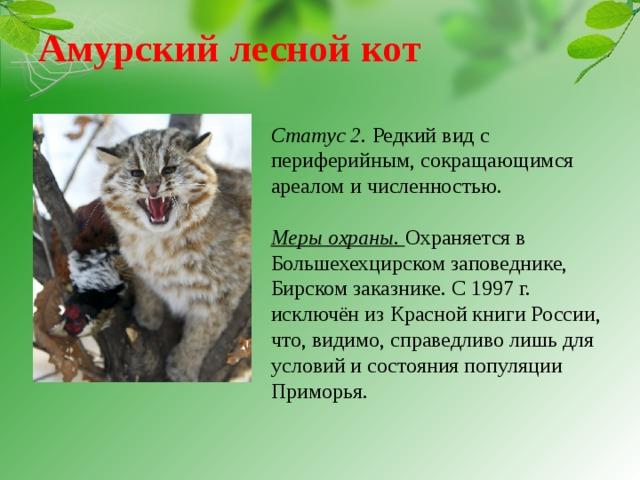 Европейский лесной кот: содержание и кормление в домашних условиях,