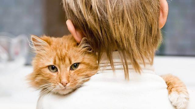 Цистит у кошки: симптомы и лечение в домашних условиях