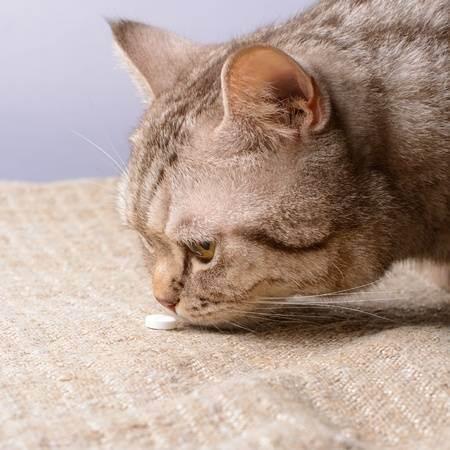 Как дать коту таблетку: полезные советы
