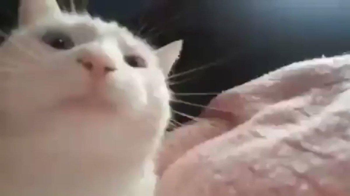 Кошка трясет головой и чешет уши: причины, лечение