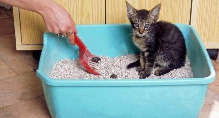 Лоток для кошек - запись пользователя алёна :-) (alena1004) в сообществе домашние животные в категории кошки. болезни, прививки, советы по уходу - babyblog.ru