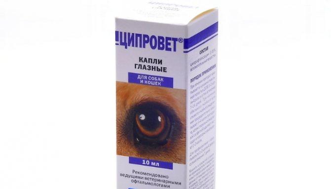 Как выбрать хорошие глазные капли для кошки?