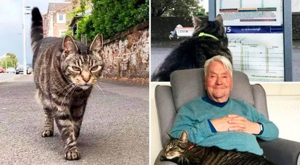 Счастливые истории про возвращение кота. невероятные истории возвращения потерянных животных домой. кот тимоти прогулялся год и месяц