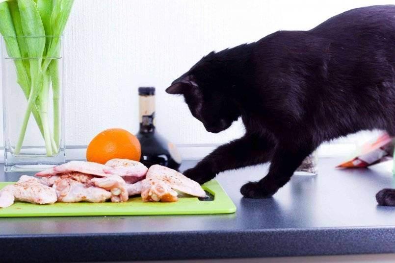 Можно ли кормить кошку свининой: мнения врачей, заводчиков и экспертов