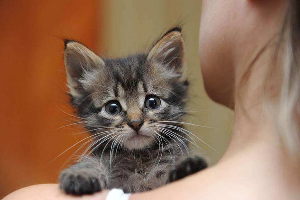 Что делать, если подобрали бездомную кошку?