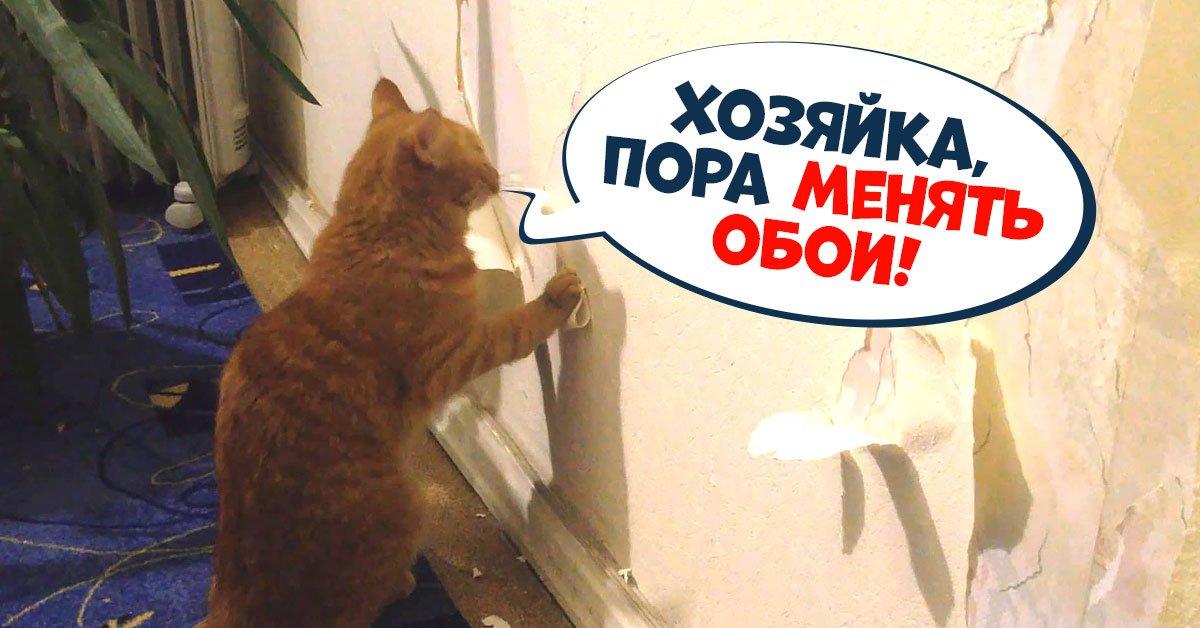 Отучаем кошку драть обои и защищаем стены от посягательств любимца
