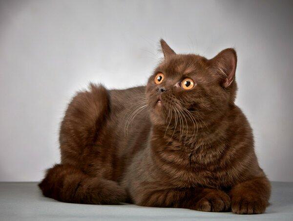 Аллергия на кошек. может ли так случится, что она пройдет?