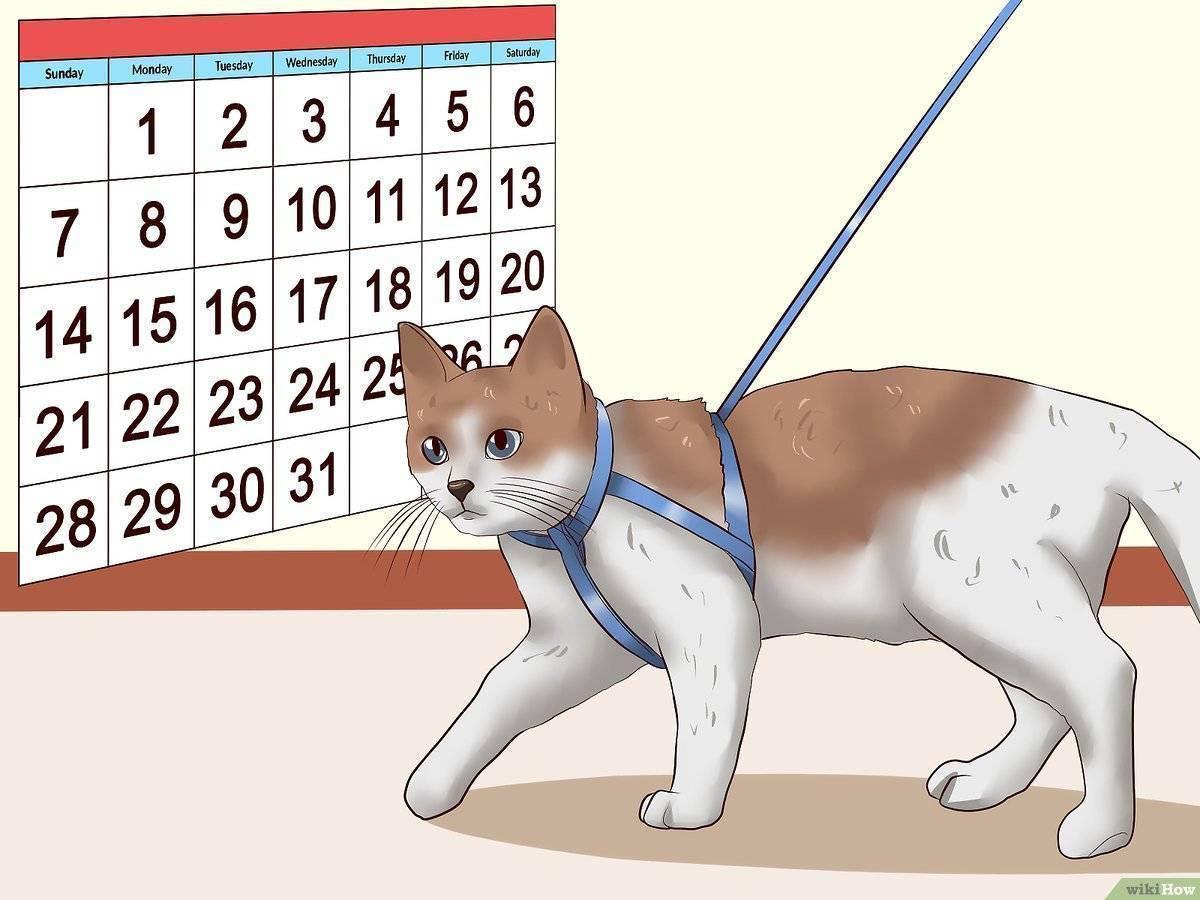Надо ли выгуливать кота