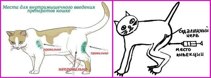 Как правильно сделать укол кошке – советы, рекомендации