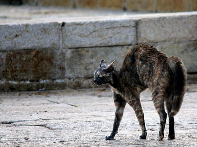 Как успокоить агрессивного кота (с иллюстрациями)