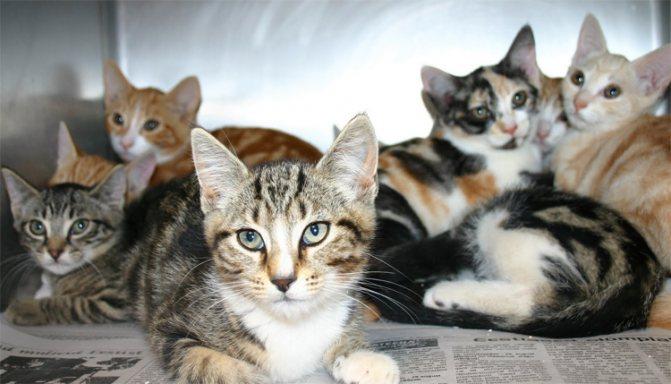 Мурчащий бизнес: как создать питомник для кошек